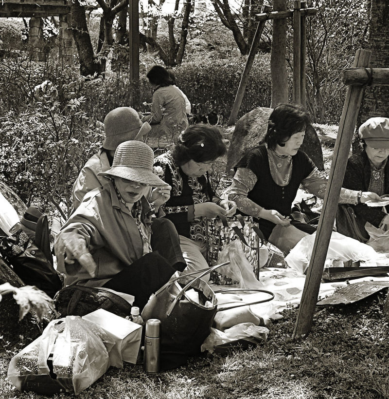 Himeji castle Japan garden picnic