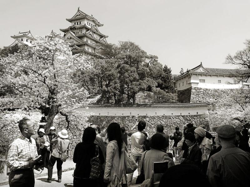 Himeji castle blossom sakura Japan photographer