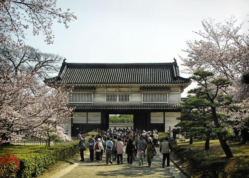 himeji castle blossom sakura japan tourist