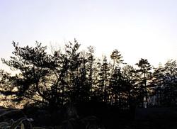 Hida Takayama tree sunset Gifu Japan