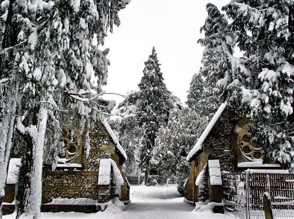Farnham England snow tree cemetary