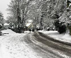 Farnham England snow tree street