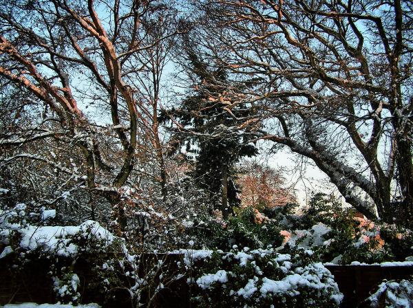Farnham England snow tree garden