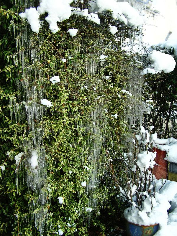 Winter in Farnham 25
