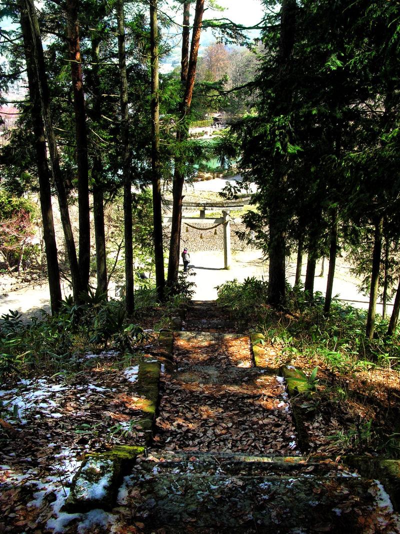 hida takayama japan gifu tree hida-folk-village