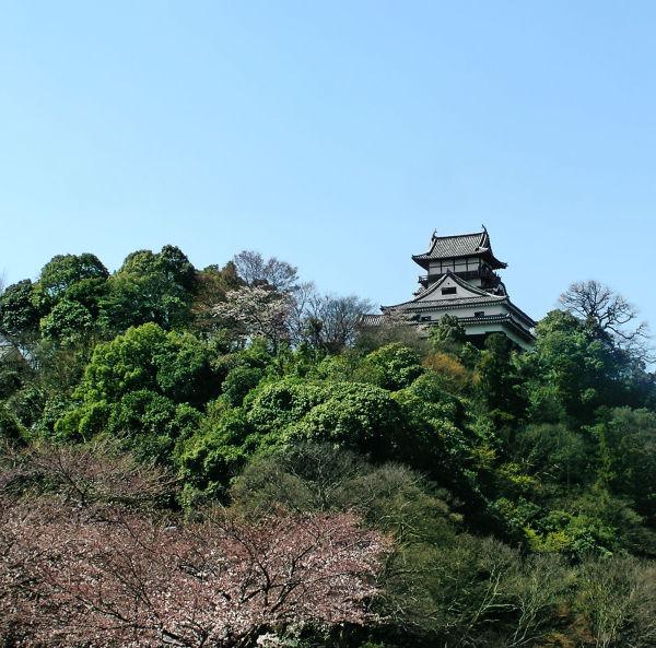 Inuyama castle Aichi Japan tree blossom hill