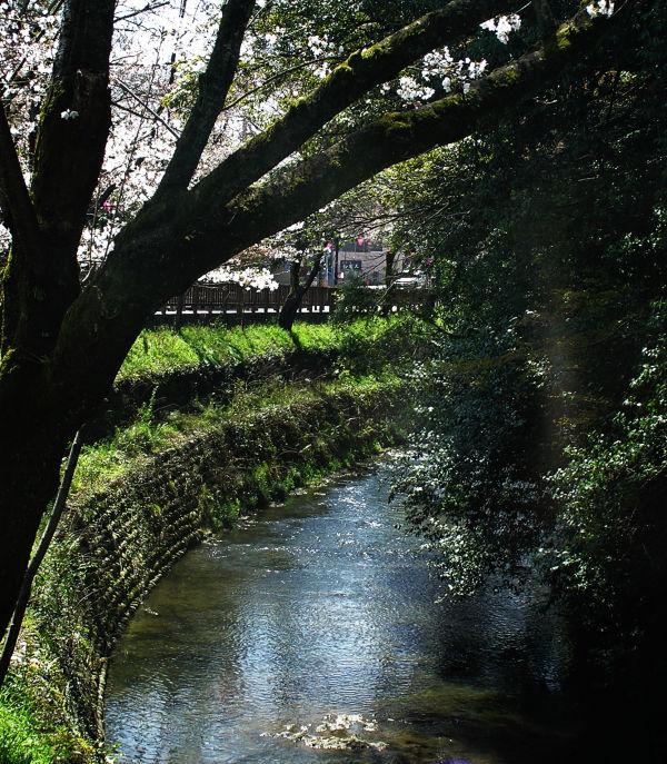 Inuyama castle Aichi Japan tree stream blossom