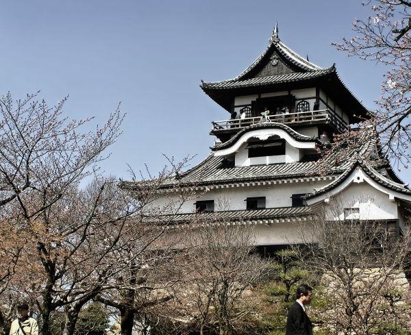 Inuyama castle Aichi Japan tree blossom