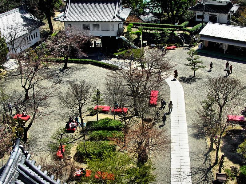 Inuyama castle Aichi Japan tree blossom tourist