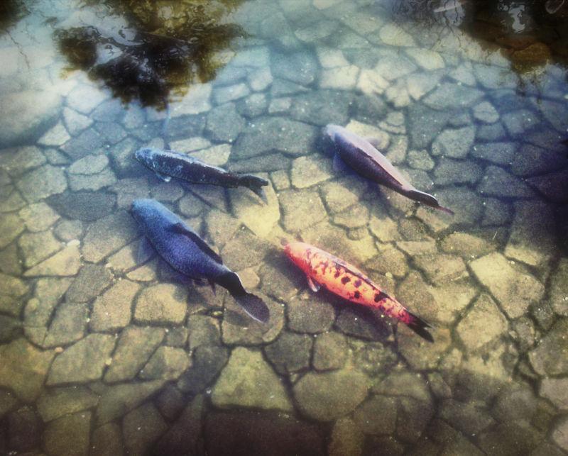 kokoen garden himeji hyogo japan pond fish koi