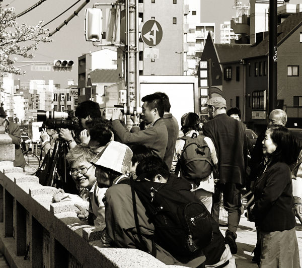 shukugawa bridge photographer sakura japan