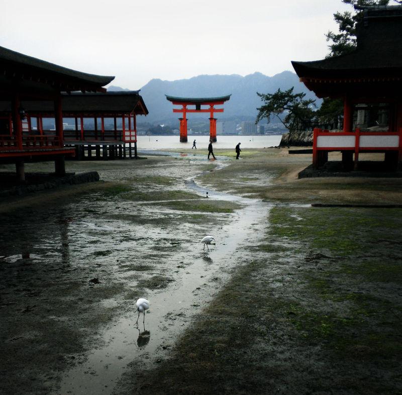 hiroshima japan miyajima itsukushima egret torii