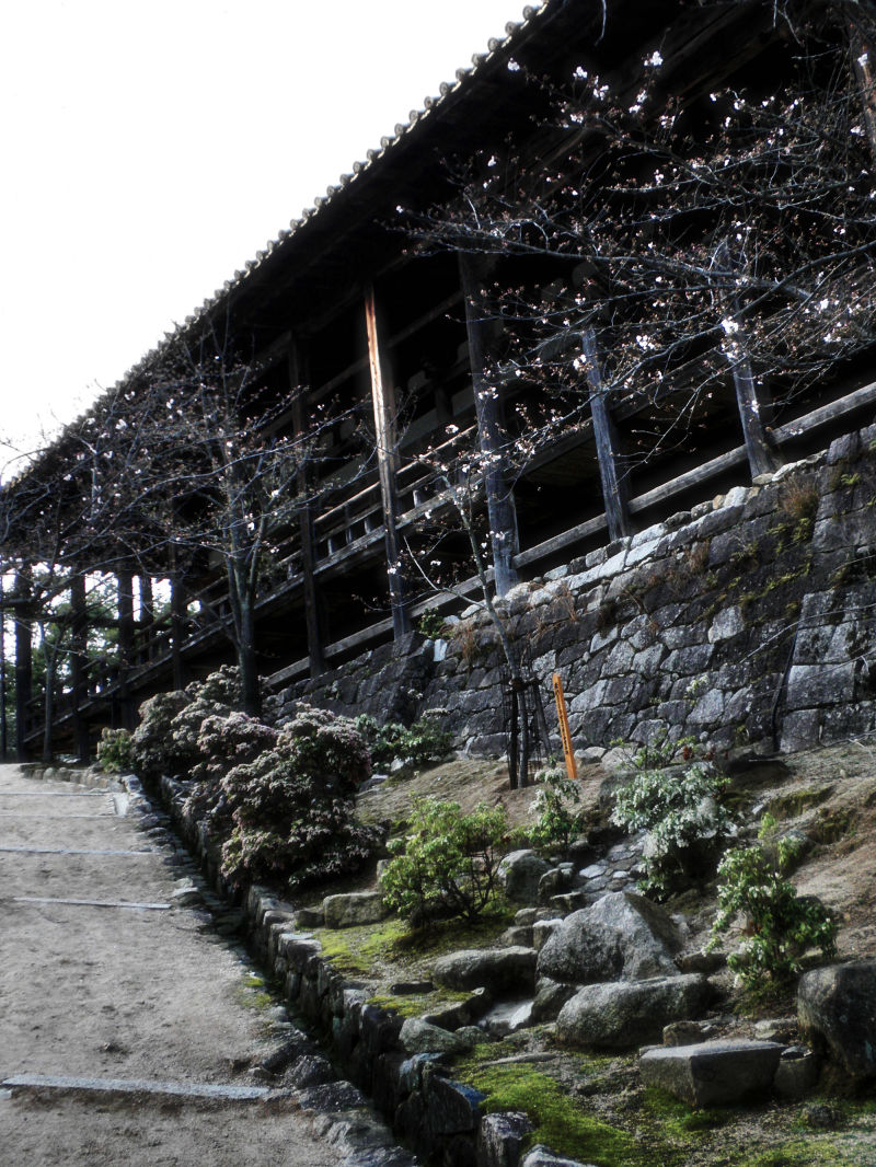 hiroshima japan miyajima itsukushima shrine tree