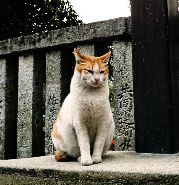 hiroshima japan miyajima itsukushima cat