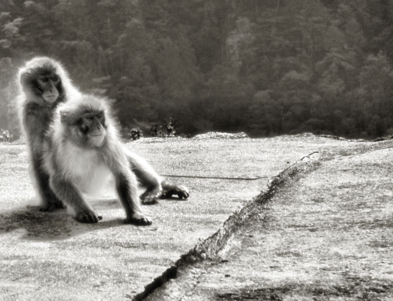 hiroshima japan miyajima mountain monkey misen