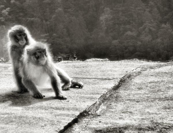 Misen Monkeys