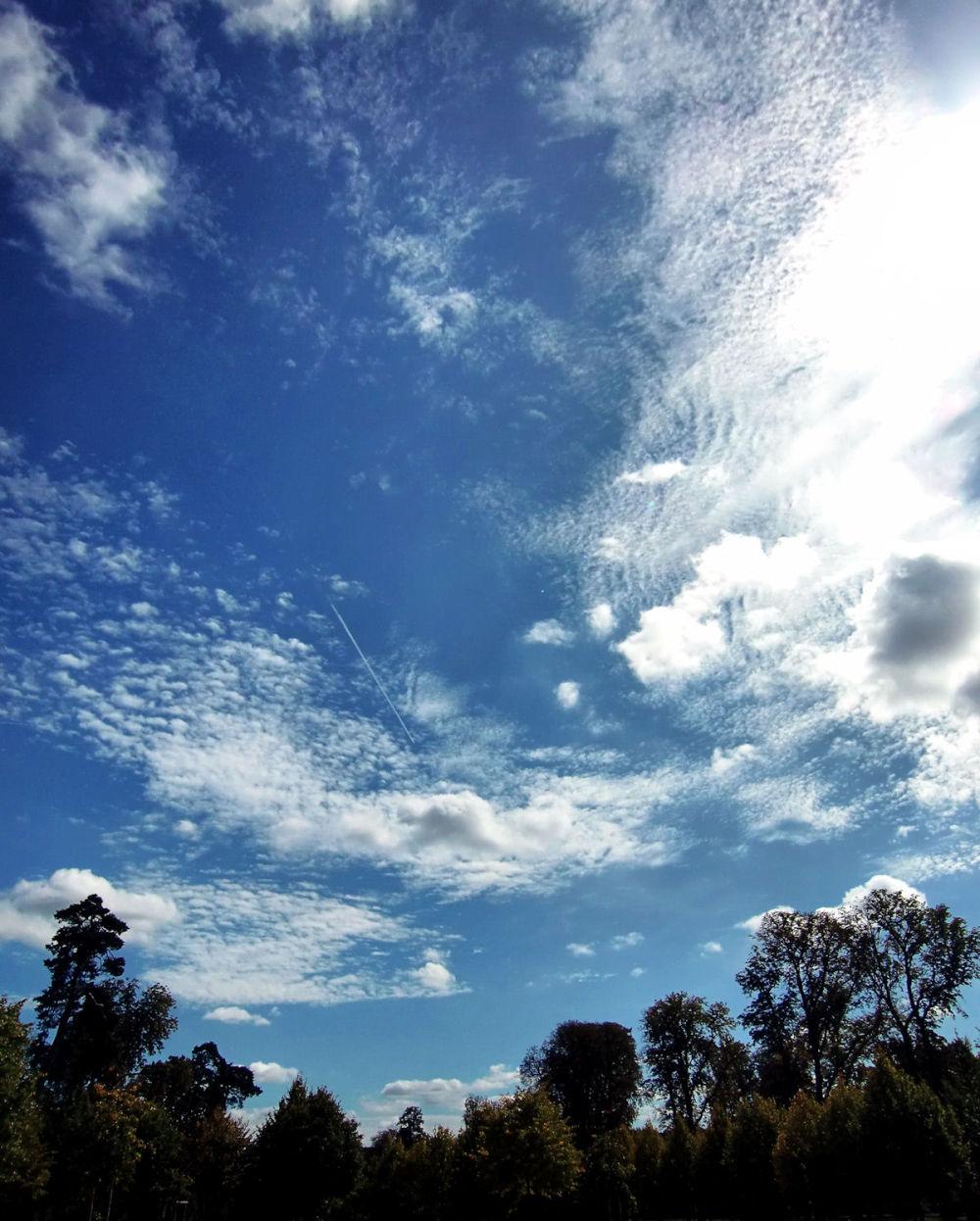 versailles france tree garden sky cloud