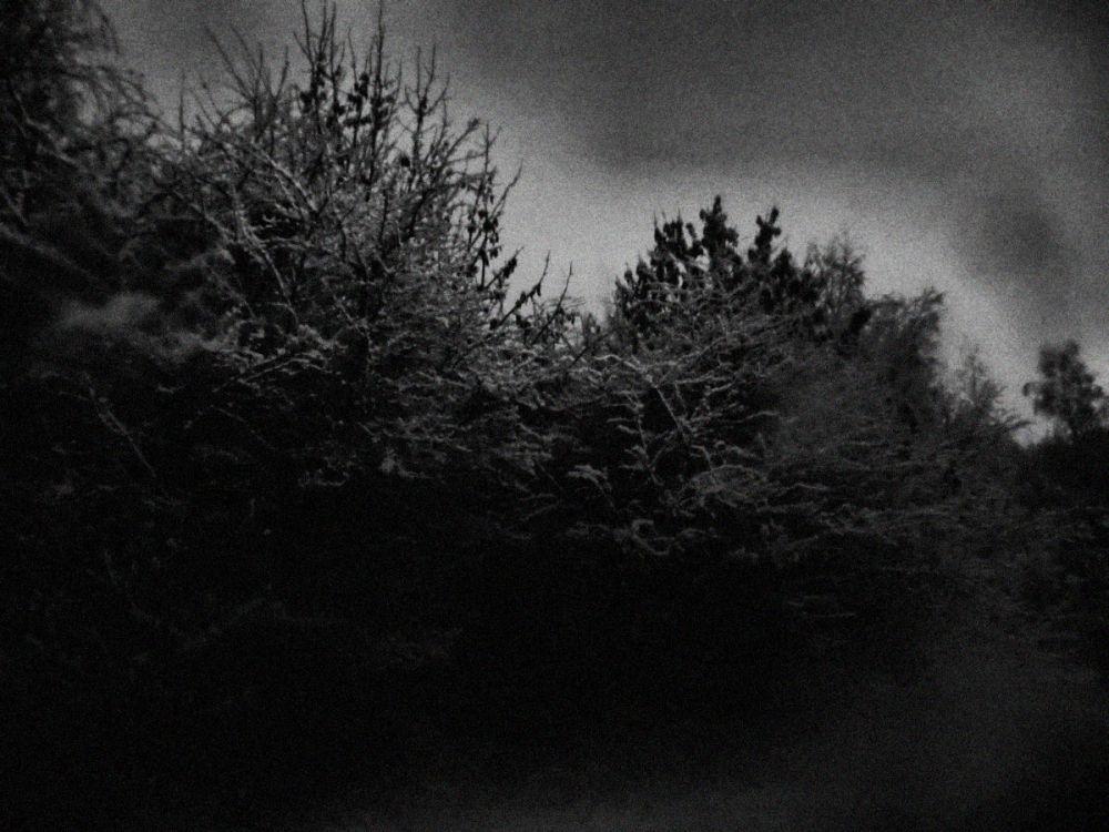 snow england new-malden tree