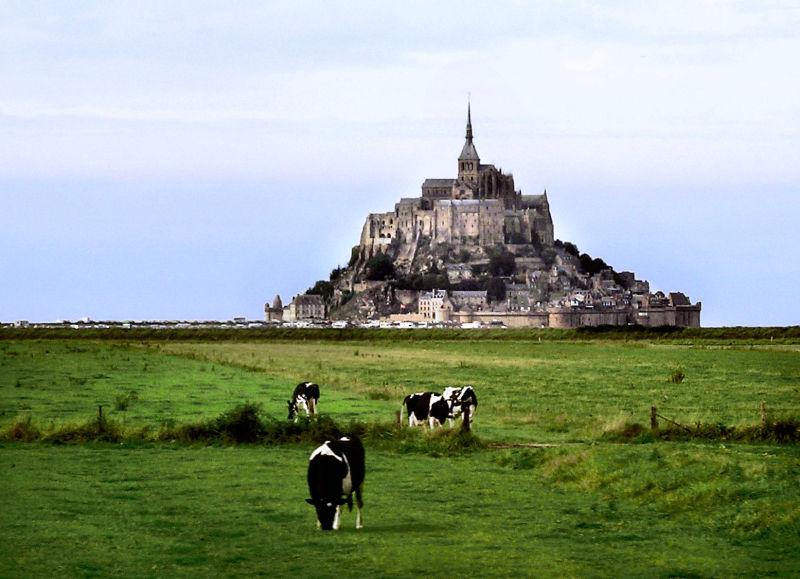 France Normandy Mont-Saint-Michel cow field