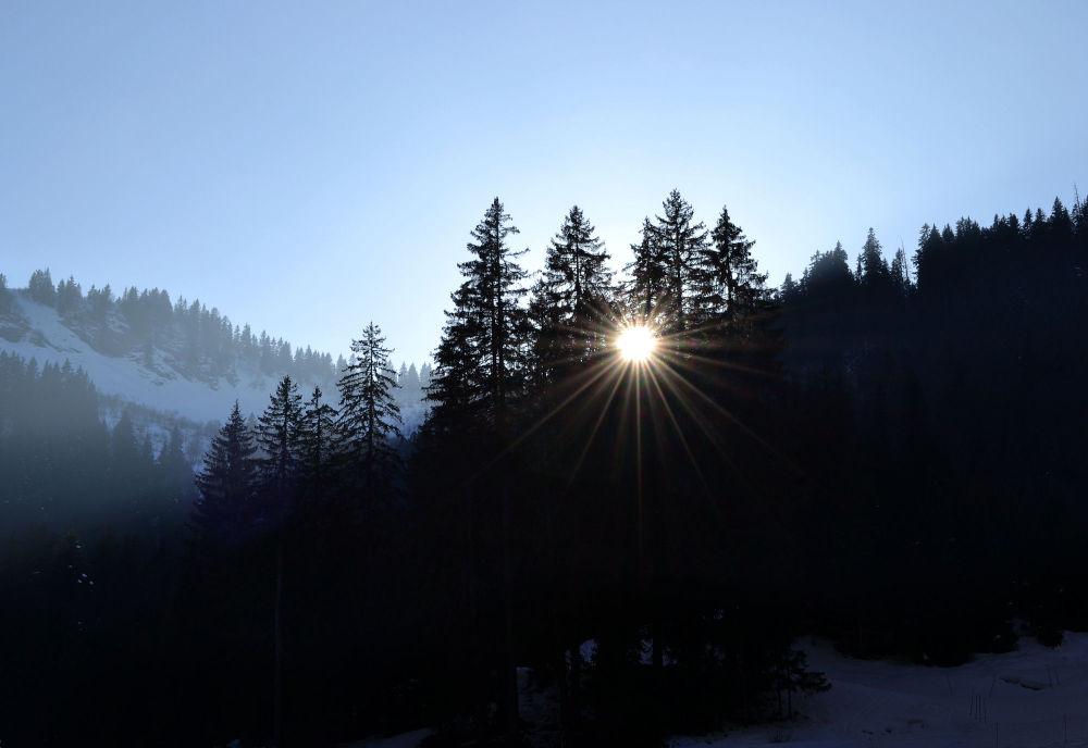 france chatel snow pré-la-joux tree mountain