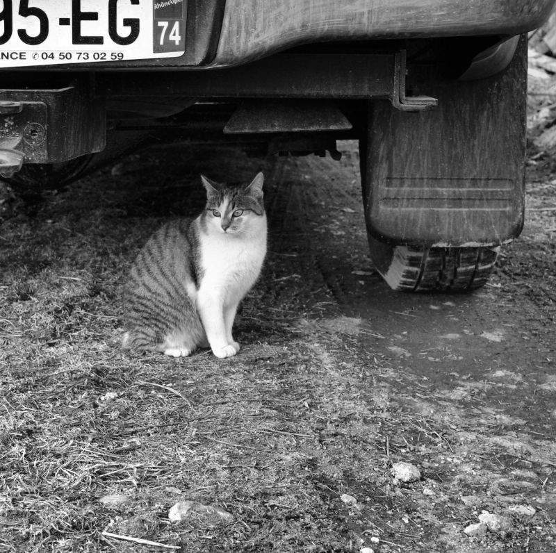 france chatel farm cat