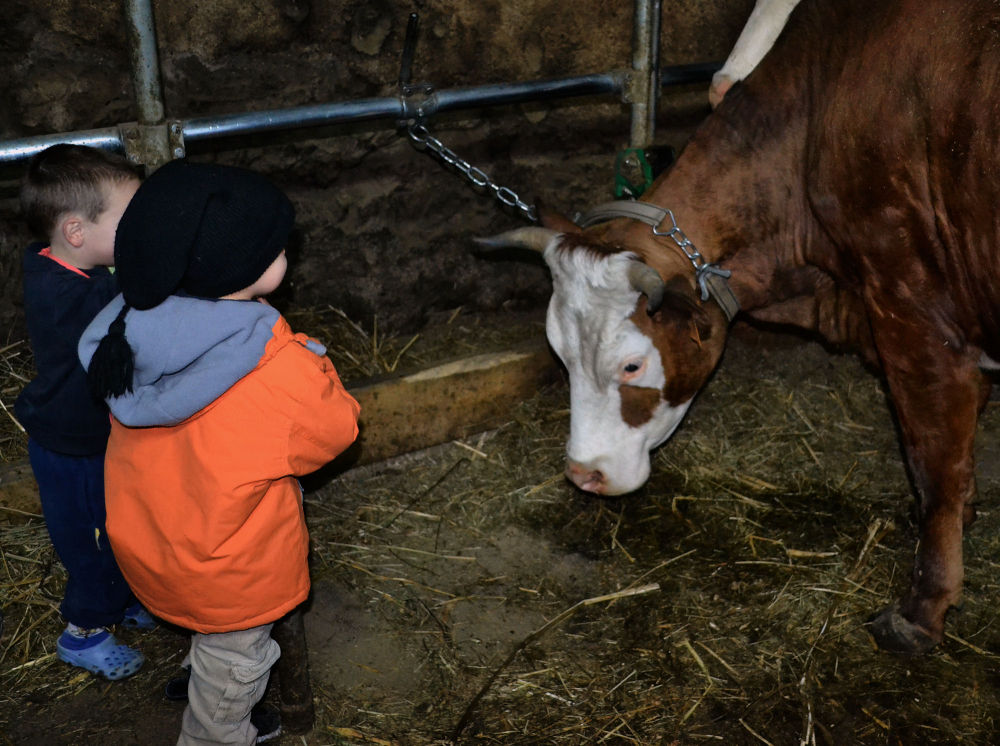 france chatel farm children cow