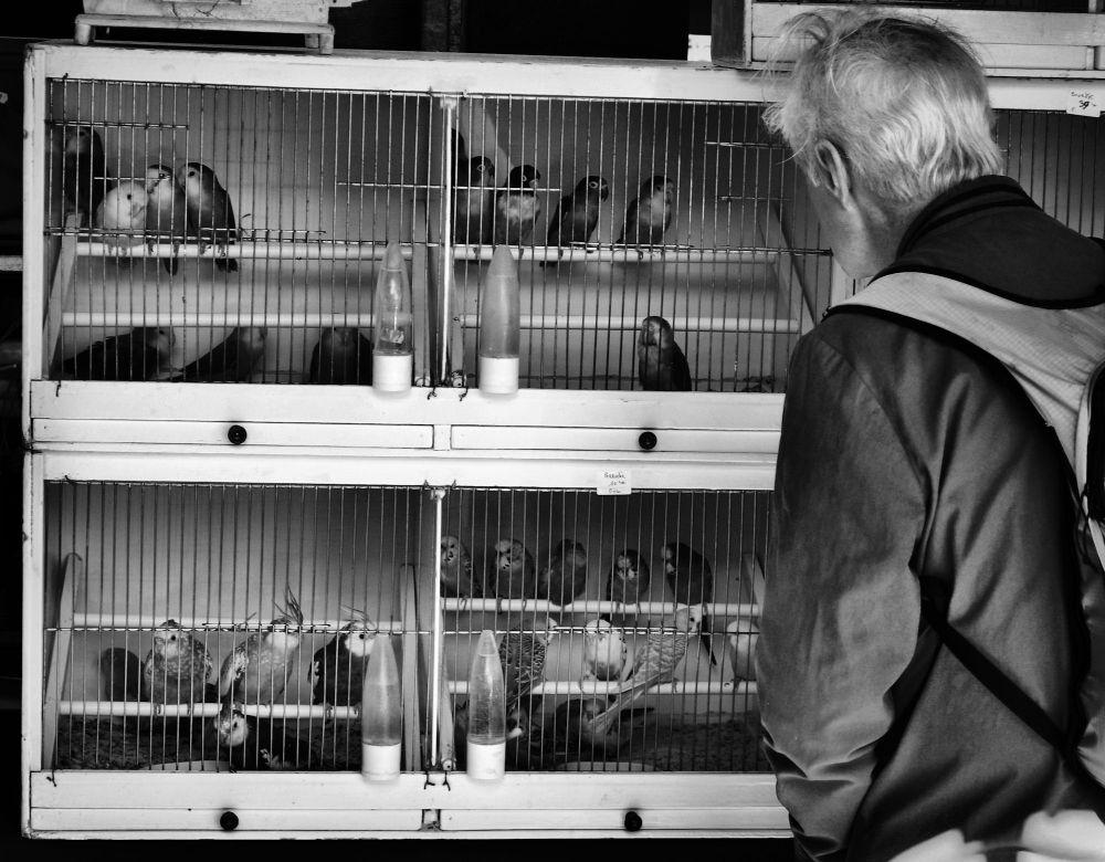 paris france market bird