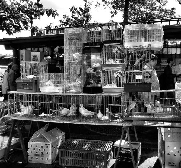 paris france market bird tourist