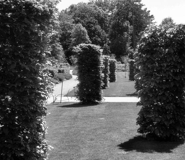 england wisley garden shrub