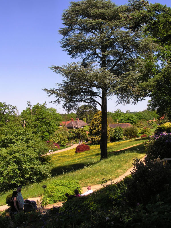 england wisley garden tree