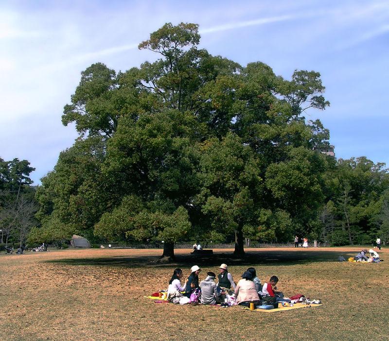 ritsurin-koen takamatsu japan garden picnic