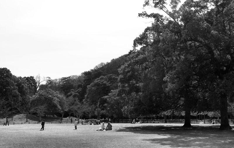 ritsurin-koen takamatsu japan garden tree
