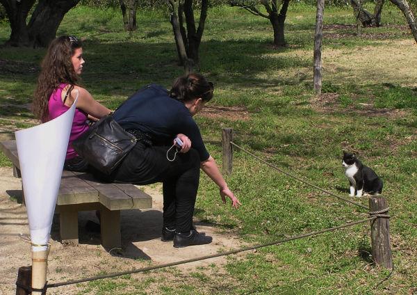 Ritsurin-koen takamatsu japan garden tourist cat