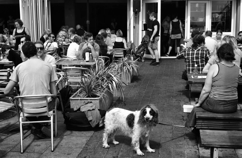 brighton england tourist restaurant cafe dog