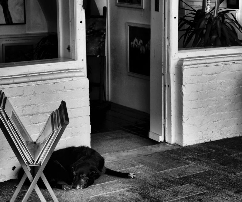 brighton england gallery dog