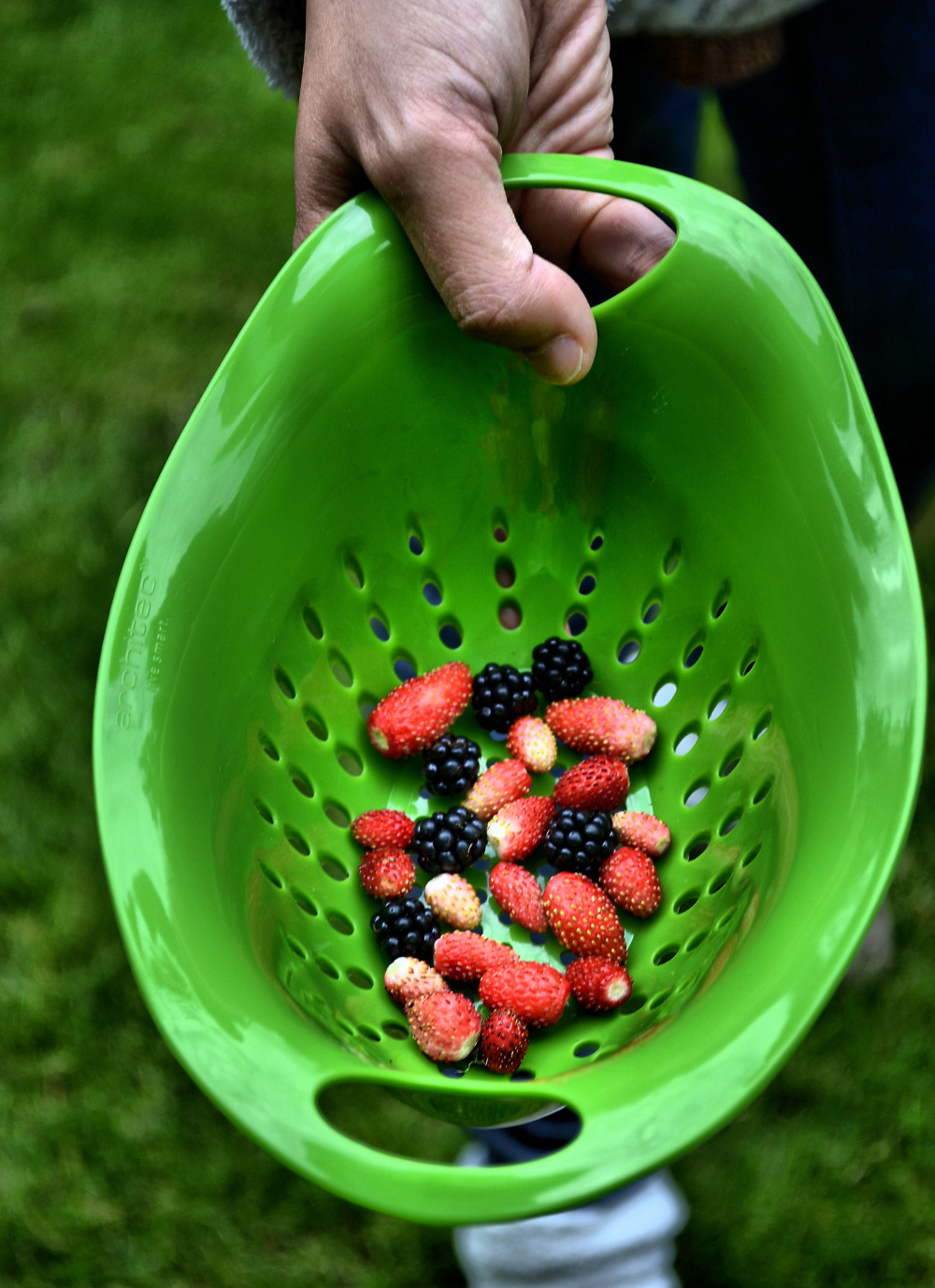 Farnham england autumn fruit
