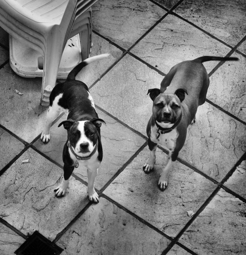 Worcester-park england dog