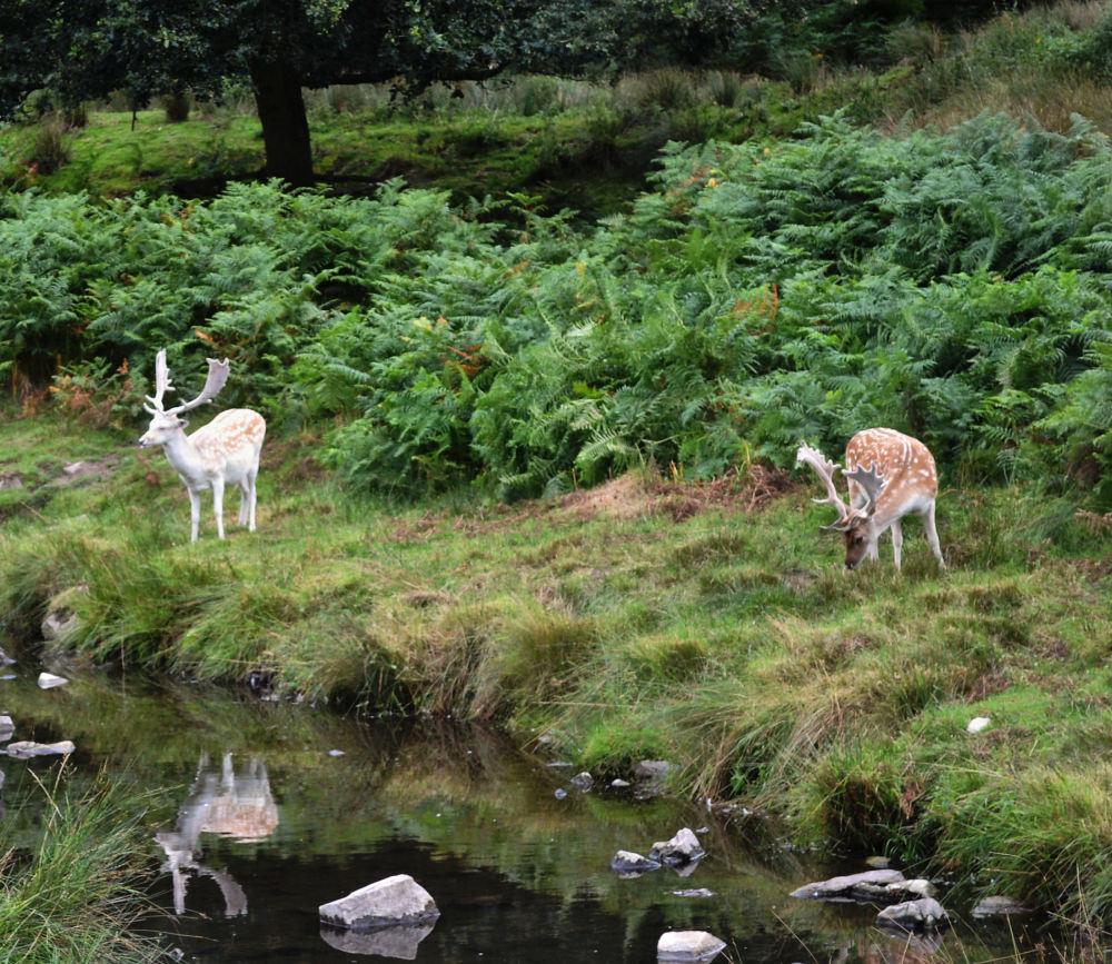 bradgate-park leicester england deer park