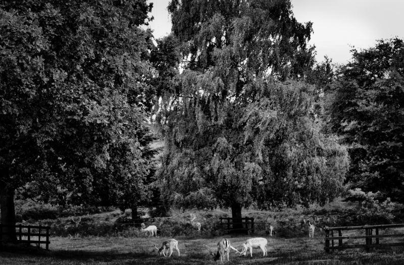 bradgate-park leicester england deer park tree