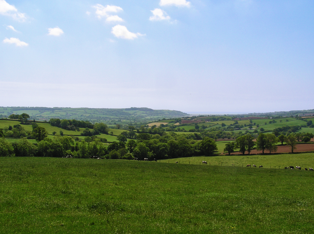 devon england field cow countryside