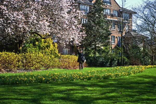 Blossom Photographer