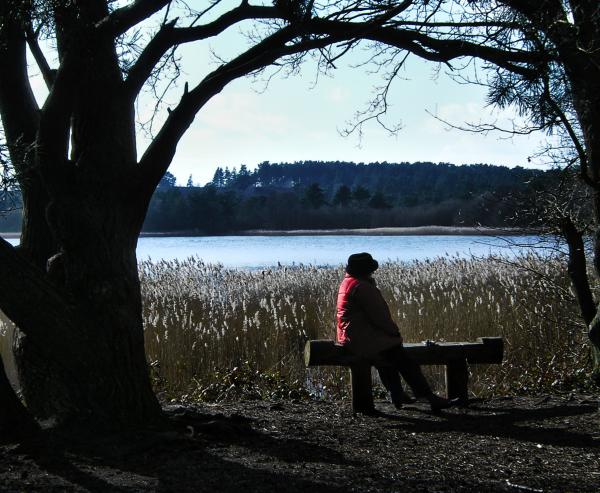 Frensham Ponds 2