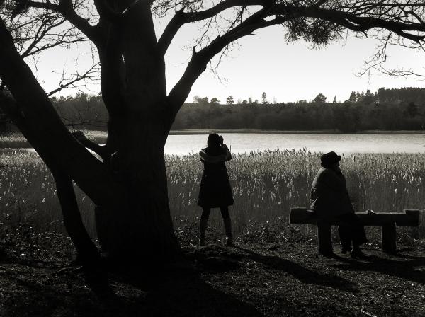 Frensham Ponds 3