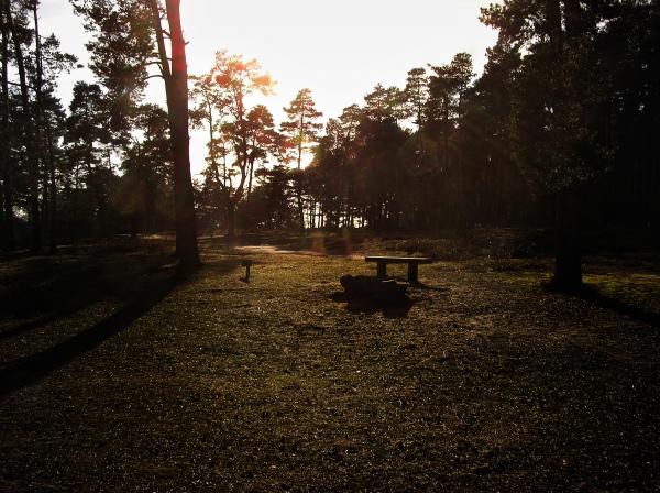 Frensham Ponds 5