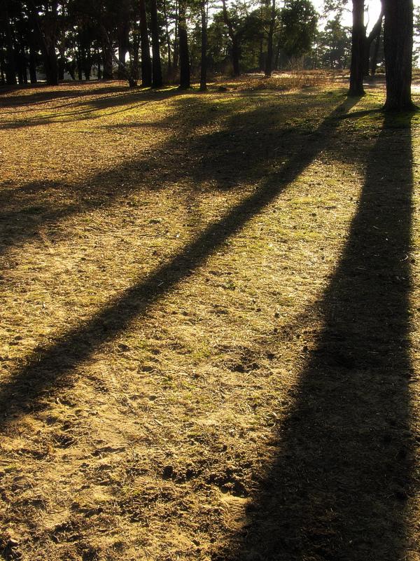 frensham-ponds farnham england heath tree forest