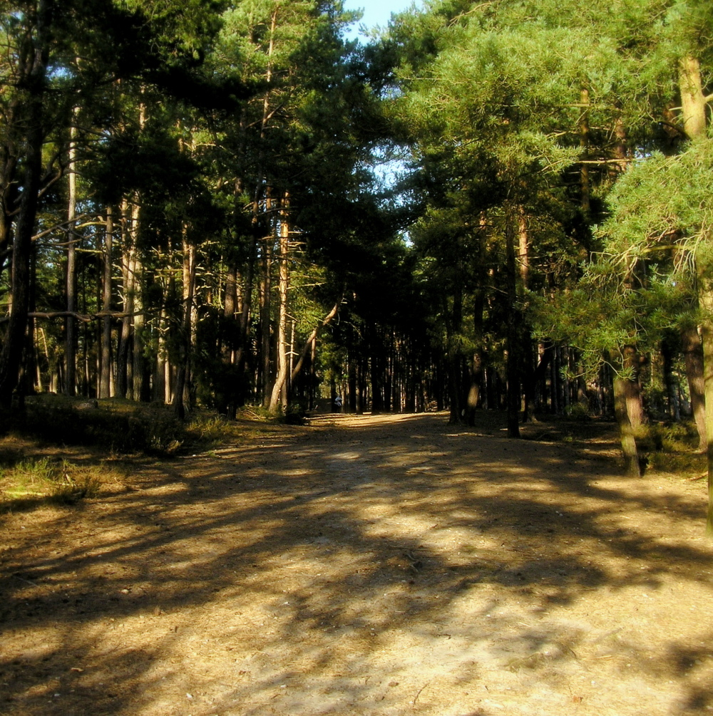 frensham-ponds farnham england tree forest