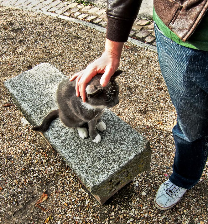 france normandy cat