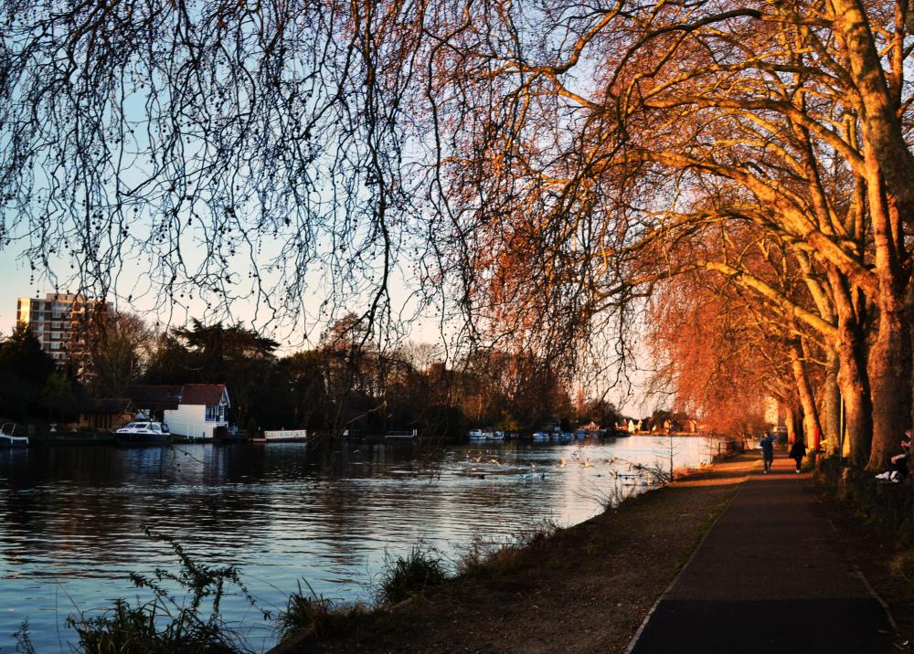 england kingston park river thames tree