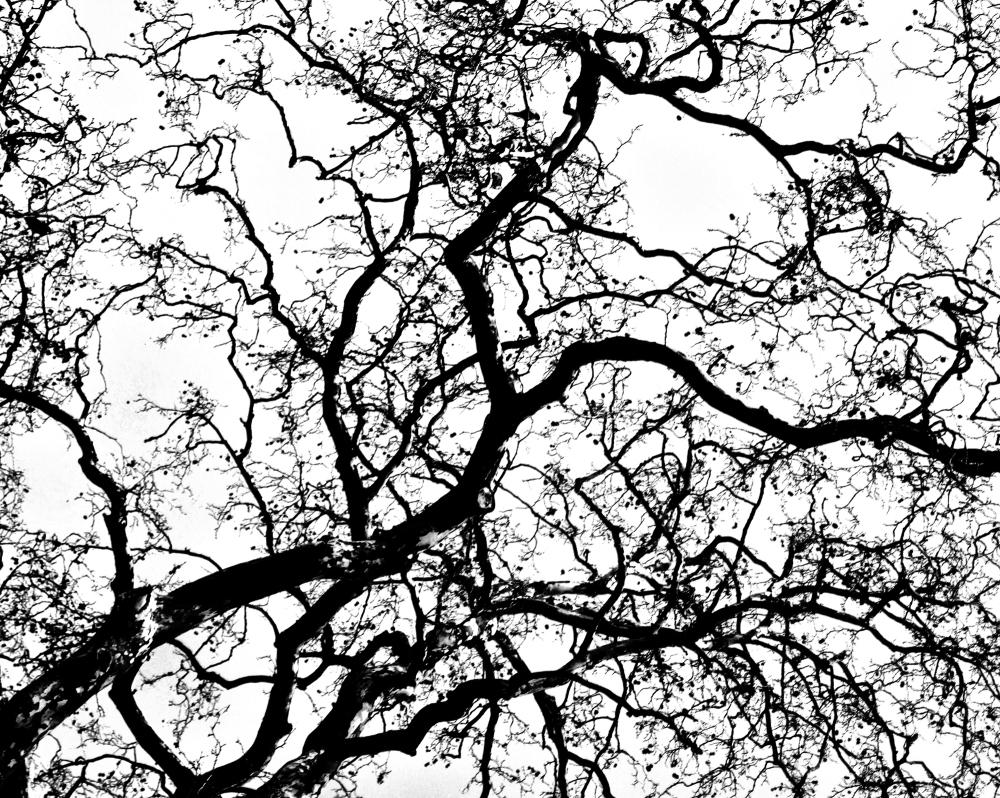 kew-gardens england tree