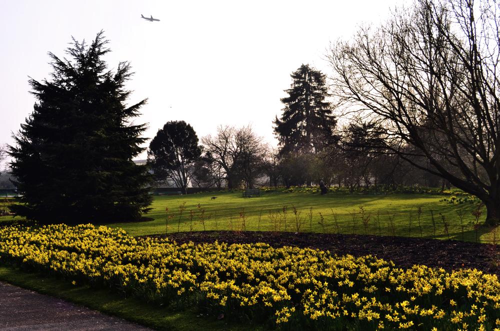 kew-gardens england garden flower daffodil